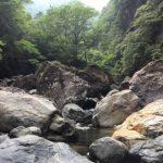 初夏、三重県は宮川水系でアマゴ釣り