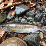 アマゴ・イワナ釣りの解禁時期に必要な釣り道具