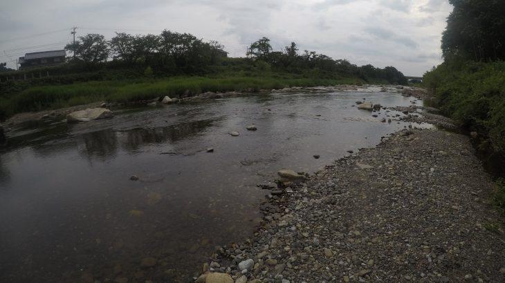 琵琶湖犬上川で小鮎釣り。