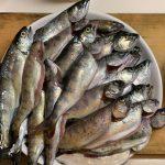 渓流での放流魚の釣り方(アマゴ・ヤマメ・イワナ)